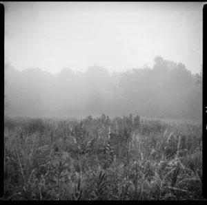 Grail Meadow Morning